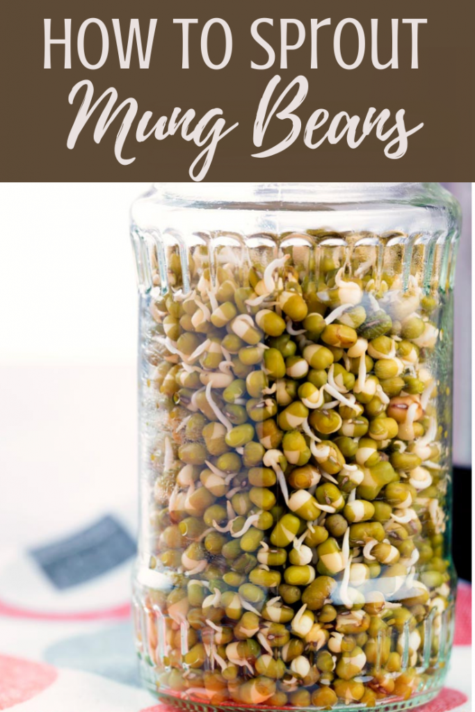 Mung bean sprouts recipe